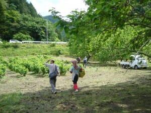 NHK 6