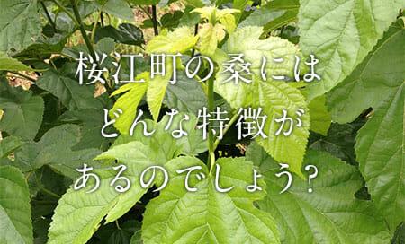 donna_tokutyou