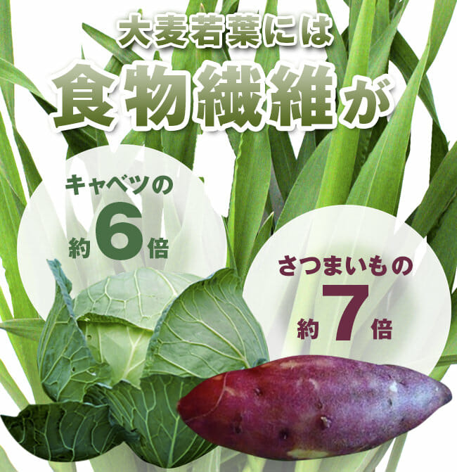 senni_hikaku_photo
