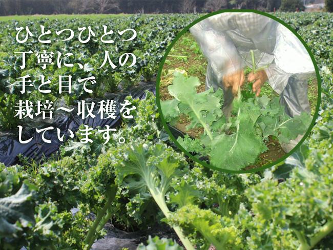 kale_hatake