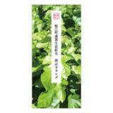 桑茶カタログ2020年版の表紙
