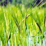 「オーガニック」と「有機栽培」の違い!「無農薬栽培」「減農薬栽培」とは違うの?